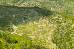 House in the vineyard. Traditional dalmatian house in the vineyard of Hvar island stock image
