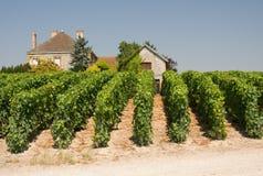 House in vineyard Stock Photos