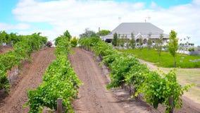 House and vineyard estate, Barossa Valley Australia. House and vineyard estate, Barossa Valley South Australia stock photo