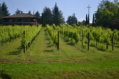House in a vineyard. Parma, Italy Royalty Free Stock Photo