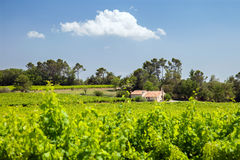 House with vineyard in sunlight day Stock Photos