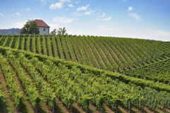 House in Vineyards Stock Images
