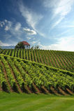 House in Vineyards Royalty Free Stock Image