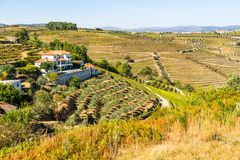 House in vineyards. Douro Valley, vineyards and impressive landscape in Portugal stock photos