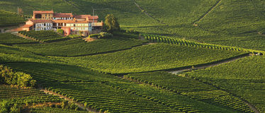 House and vineyards in Italy. Stock Photography