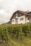 House with vineyards Stock Image