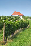 House in Vineyards. Skalce, Slovenia Royalty Free Stock Images