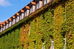 House with Virginia creeper Royalty Free Stock Photography