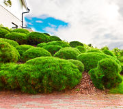 House wall and garden Royalty Free Stock Photo
