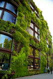 House wall overgrown with beautiful green, nature design. Paris, France royalty free stock photo