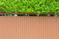 House wall with small green tree on top backdrop, outdoor Royalty Free Stock Image