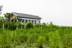 House and water plants Royalty Free Stock Photo