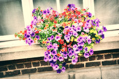 House window with colorful petunias Royalty Free Stock Photography