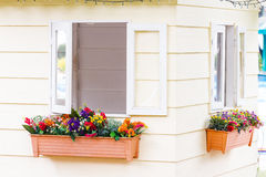 House window and flower Royalty Free Stock Photo