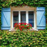 House Window with Geranium Planter and Shutters Stock Image