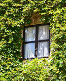 House with windows covered with ivy Royalty Free Stock Photography