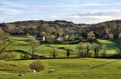House in the Winster Valley, with grazing sheep. Royalty Free Stock Photography