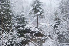 House in the winter forest with snow-covered trees and snowfall Royalty Free Stock Image