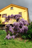 House with wisteria Stock Images
