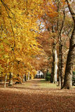 House in the woods with autumn. Big house in the woods in autumn Royalty Free Stock Images