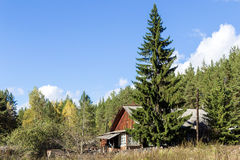The house in the woods. The house in the wood with the big fir-tree standing nearby Royalty Free Stock Photos
