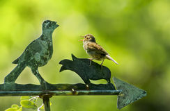 House wren bird sings on a weathervane Royalty Free Stock Photography