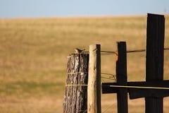 House Wren on old fencepost Stock Image