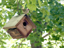 House wren on wren house Stock Photography