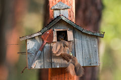 House wrens work together to coax their newly hatched chicks fro Stock Photos