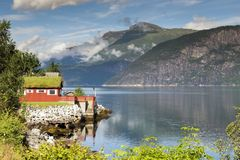 House at the eidfjord norway. House wth vegetation plants and flowers on the roof at the eidfjord in norway Royalty Free Stock Photo