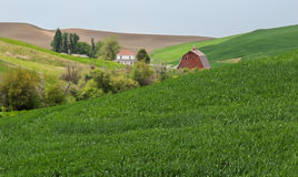 House and yard create an oasis in the wheat fields Royalty Free Stock Photos