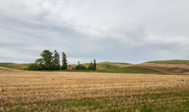 House and yard create an oasis in the wheat fields Stock Image