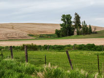 House and yard create an oasis in the wheat fields Stock Photo