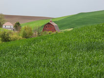 House and yard create an oasis in the wheat fields Royalty Free Stock Images