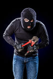 Housebreaker Stock Photo
