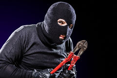 Housebreaker Portrait Stock Images