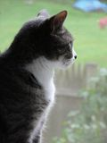 housecat凝视的被筛选的视窗 库存图片