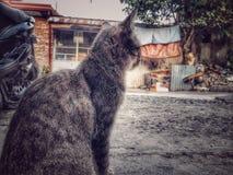 Housecat fotografia royalty free
