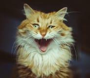 Housecat fotografering för bildbyråer