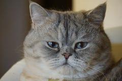 Housecat Stock Photography