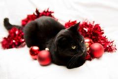 Housecat in einem christmasmood Lizenzfreies Stockfoto