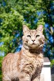 Housecat with morning sun Royalty Free Stock Photography