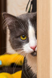 Cat with yellow eye Royalty Free Stock Photography