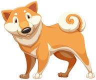 Housedog de Brown Foto de archivo libre de regalías