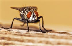 Housefly sitting on a wood piece stock photo