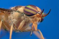 Housefly - Tabanida Stock Photo