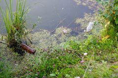 Household garbage on the river Bank. Plastic bottles lie in nature. Problem of ecology stock photography