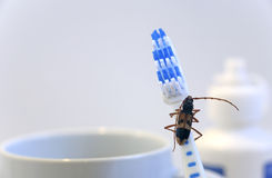 Household Pest. Roach-like pest on toothbrush Stock Images