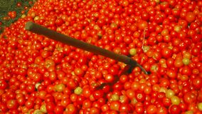 A household shovel sticks out from under a pile of red tomatoes stock video