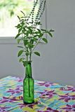 Household table setting with bottle and basil Stock Image